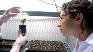 David frente a Goliat: planta