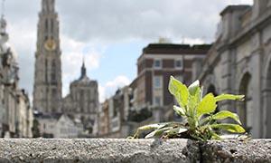 Imagen proyecto Mantén limpia tu ciudad.