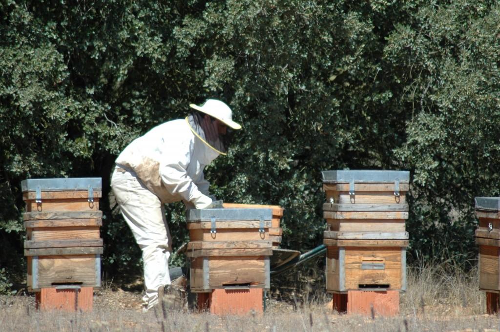 Abraza la tierra: apicultor