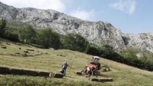 SOS Praderas: siega y paisaje