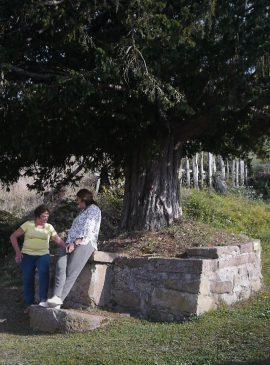 Frame del audiovisual Hacia el árbol.